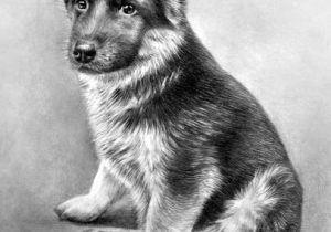 Drawing Of Dog German Shepherd Easy Baby Thor Simply Silentartists Art In 2019 Drawings Pencil