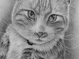 Drawing Of Dog Gift Custom Cat Drawing Custom Pet Portraits Lovely Animal Art