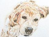 Drawing Of Dog Gift Custom Pet Portrait A5 Watercolour Dog Portrait Pet Memorial