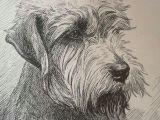 Drawing Of Dog Gift Dandie Dinmont Terrier Dog Print Vintage 1935 Dog Bookplate Unique