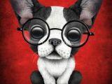 Drawing Of Dog Wearing Sunglasses 6881 Best Cutie Cartoons Images In 2019 Cute Drawings Drawings