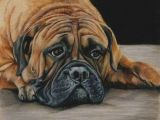 Drawing Of Dog with Color Colored Pencil Bull Mastiff Dog Drawing by Portraitsbyaleks