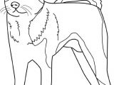 Drawing Of Dog with Color Dinosaur Pics to Color Alcater Coloring Page