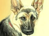 Drawing Of Dog with Color How Do You Draw A Beautiful Dog Using Colored Pencils German