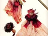 Drawing Of Dying Flowers 73 Best Dead Flowers Images Flower Art Botanical Art Dying Flowers