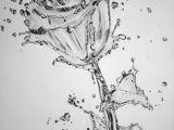 Drawing Of Dying Flowers Die 474 Besten Bilder Von Drawing Drawing Ideas Drawings Und