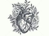 Drawing Of External Heart 1596 Best Anatomical Heart Images Anatomical Heart Human Heart