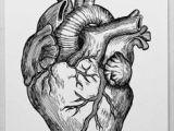 Drawing Of External Heart 45 Best Heart Anatomy Images Heart Anatomy Cardiology Nurses