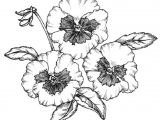 Drawing Of Flower Growing How to Create and Draw A Planting Plan You Can Use for Your Own