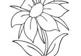 Drawing Of Flower Jasmine Black Outline Drawing Flower White Flowers Free Drawing