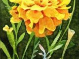 Drawing Of Flower Marigold 104 Best Marigolds Images Carnival Glass Marigold Colored Glass