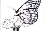 Drawing Of Flowers and butterflies Drawings Of Flowers and butterflies My Drawing Of A butterfly by