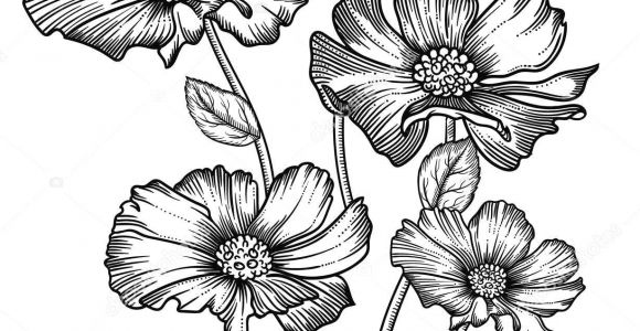 Drawing Of Flowers for Decoration Blooming forest Flowers Detailed Hand Drawn Vector Illustration