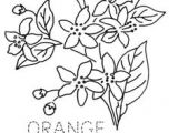 Drawing Of Flowers for Embroidery 1397 Best Embroidery Flowers Images Embroidery Embroidery