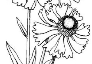 Drawing Of Flowers Pinterest 2375 Best Line Drawings Images Coloring Pages Print Coloring