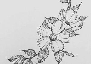 Drawing Of Flowers Pinterest 25 Fancy Draw A Flower Helpsite Us
