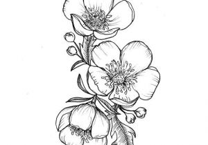 Drawing Of Flowers Tattoo Custom buttercup Illustration Tattoo for Greer by themintgardener