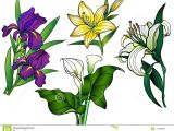 Drawing Of Flowers with Leaves Flowers Set Of Flowers Bouquets Linear Flowers and Leaves with A