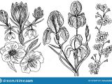 Drawing Of Flowers with Leaves Wild Flowers with Leaves Set Of Wedding Botanical Plant with Leaf