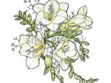 Drawing Of Freesia Flower 24 Best Freesia Flowers Images Freesia Flowers Flowers Beautiful