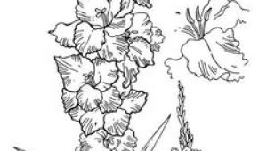 Drawing Of Gladiolus Flower 17 Best Gladiolus Tattoo Black Images Gladiolus Flower Tattoos