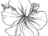 Drawing Of Gladiolus Flower 26 Best Tattoos Images Gladiolus Flower Tattoos Flower Tattoo