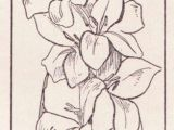Drawing Of Gladiolus Flower Gladiolus Flower Drawing Images Beautiful Coloring Pages