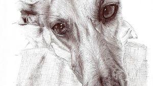 Drawing Of Greyhound Dog Cadejo Sighthouns In Art Greyhound Art Dog Art Dog Portraits