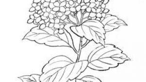Drawing Of Hydrangea Flower 62 Best Hydrangea Images Hydrangeas Watercolor Painting Flower Art