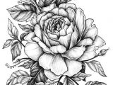 Drawing Of Mogra Flower Rose with Banner New Easy to Draw Roses Best Easy to Draw Rose