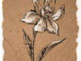 Drawing Of Oleander Flower 126 Nejlepa A Ch Obrazka Z Nasta Nky Flowers Drawing Of Daffodil