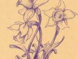 Drawing Of One Flower 126 Nejlepa A Ch Obrazka Z Nasta Nky Flowers Drawing Of Daffodil