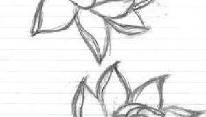 Drawing Of Rose and Lotus 71 Best Roses Images Drawings Draw Flowers