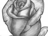 Drawing Of Rose Bud Hoontoidly Roses Drawings Images