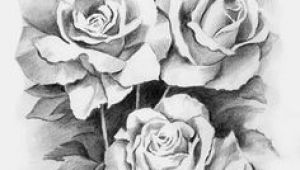 Drawing Of Rose Garden 61 Best Art Pencil Drawings Of Flowers Images Pencil Drawings