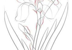 Drawing Of Sampaguita Flower 295 Best Drawing Step by Step Images In 2019 Drawing Art Painting