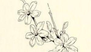 Drawing Of Sampaguita Flower 37 Best Sampaguita Images Arabian Jasmine Beautiful Flowers