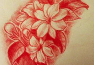 Drawing Of Sampaguita Flower Drawing Of My Tattoo Sampaguita Flowers by Lindsay Bugbaker