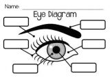 Drawing Of the Eyes and Label 121 Best Eye Anatomy Images Eye Anatomy Eyeball Anatomy Eyes