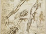Drawing Of Three Hands A Rare Glimpse Of Leonardo Da Vinci S Anatomical Drawings Draw