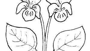Drawing Of Violet Flower Violet Flower Super Coloring Pillow Designs Pinterest