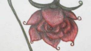 Drawing Of Wilted Flower Abstract Rose A Wilted Rose Rose Drawings Wilted Rose