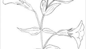 Drawing Of Winter Flowers Bunch Of Flowers Drawing Easy S S Media Cache Ak0 Pinimg originals