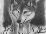 Drawing Of Wolves Hunting 180 Best Wolf Drawings Images Drawing Techniques Drawing