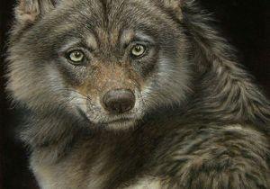 Drawing Pastel Wolf D N D D D D D Do Irina Miroshnikova D D N N D D Dµd D Dµ D D Liveinternet