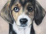 Drawing Puppy Eyes Puppy Eyes by Sanny Wolf On Deviantart