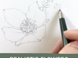 Drawing Quickly Learn How to Draw Realistic Flowers In Less Than One Week Join Me