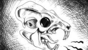 Drawing Rat Skull 36 Best Rat Skull Tattoo Images Rats Skull Tattoos Sugar Skull