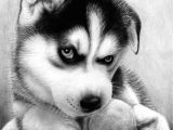 Drawing Really Cute Baby Animals 40 Realistic Animal Pencil Drawings Pencil Drawings Drawings