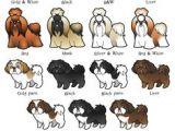 Drawing Short Dog Hair 120 Best Drawing Dog Images Cute Drawings Kawaii Drawings Doggies